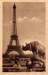 Paris – Les jolis coins de Paris – Jardin du Trocadéro – Rhinocéros par Rouillard